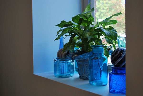 plant and vases on a window sill